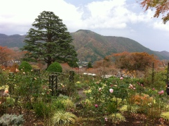 Hakone Gora Park offers free entrance for Hakone Freepass ticket holders