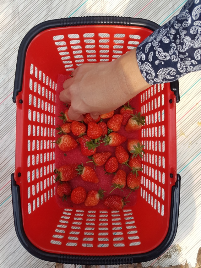neihu strawberry farm 2